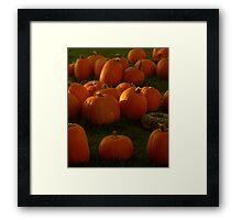 Pumpkin Menagerie, 2012 Framed Print