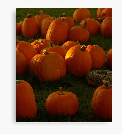 Pumpkin Menagerie, 2012 Canvas Print