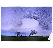 Murmuration of Starlings at Gretna Green Poster