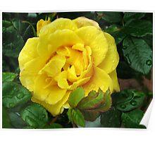 Golden Rose Bejewelled Poster