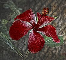 Red Hibiscus Decked Out by Deborah  Benoit