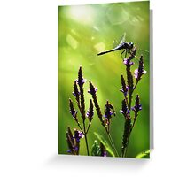 Dragonfly 1st Light Greeting Card