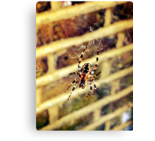 Spider close up Canvas Print