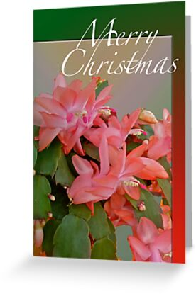Merry Christmas Greeting Card - Christmas Cactus by MotherNature