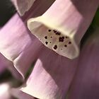 Foxglove by Joy Watson