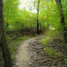 Path in the Woods by Robin Black