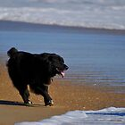 Happy Dog by Robin Lee