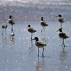 Willets by Robin Lee