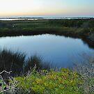 Sunset on Pea Island by Robin Black