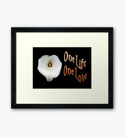 """Calla Lily Isolated on Black """"One Life, One Love"""" Greeting Framed Print"""