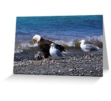 Bald Eagle Seagulls Grandeur  Greeting Card
