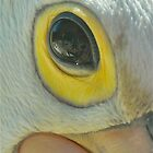 Pelican Eye to Eye by peasticks