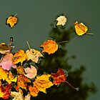 Leaves on Trout Pond in Fall by FedericoArts