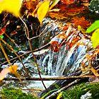 Waterfall Closeup, Casco, Maine by FedericoArts