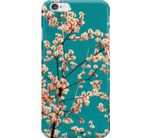 willow catkin I iPhone Case/Skin