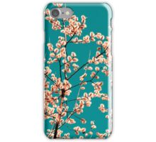 willow catkin I iPhone Case/Skin
