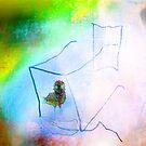 bird in a box 44 by marcwellman2000
