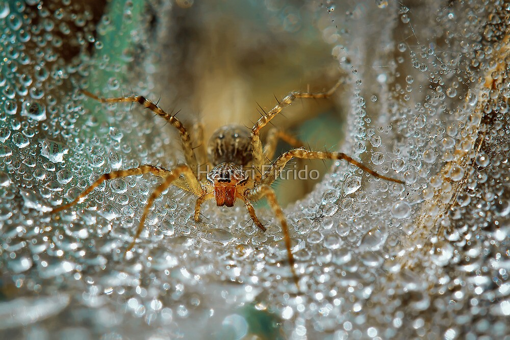 Dews Keeper by Handri Fitrido