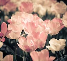 floral 30 by Karm Photography