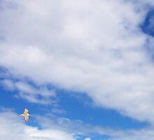 Turn In Flight by Robert Phillips