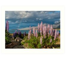 Lupins at the End of the Rainbow Art Print