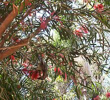 Honey Bird Feeding Four - 20 10 12 by Robert Phillips