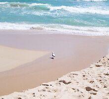 Gulls In Water Tilt - 20 10 12 by Robert Phillips