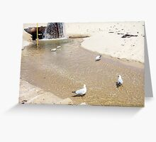 Gulls In Water Four - 20 10 12 Greeting Card
