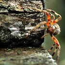 Spider At Work by michaelasamples
