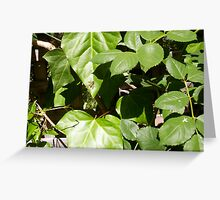 Paper Wasp One - 20 10 12 Greeting Card