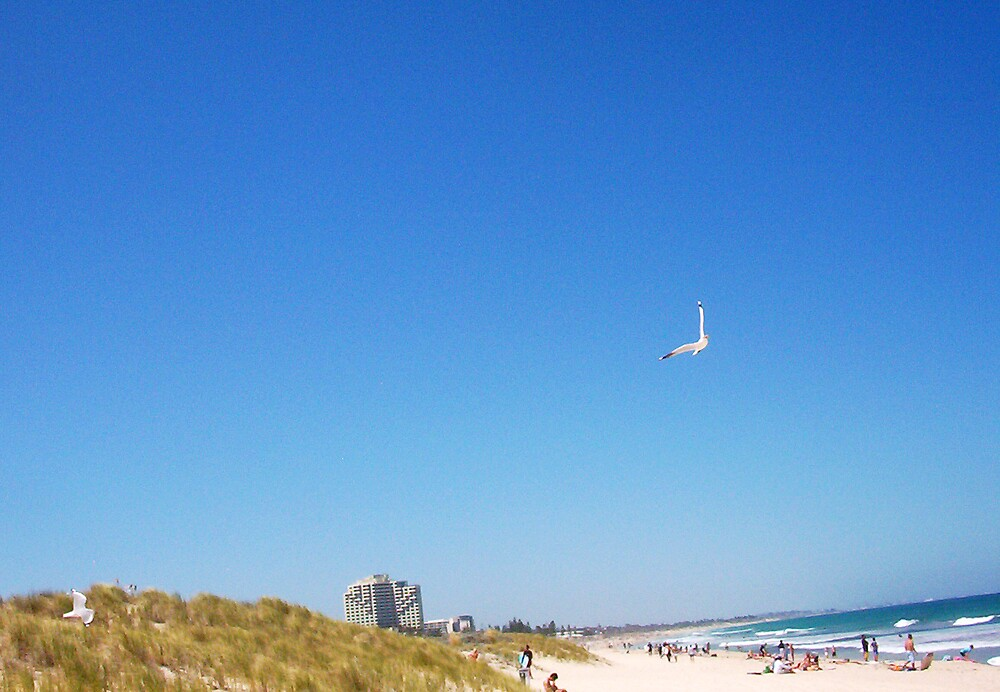 Seagull Two - 21 10 12 by Robert Phillips