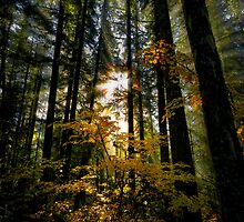 Light Of The World by Charles & Patricia   Harkins ~ Picture Oregon