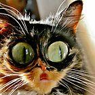 Scaredy Catz by Ladymoose