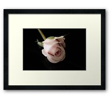 wax rose on black background Framed Print