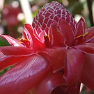 Dappled Sunlight (Red Torch Ginger) by Kerryn Madsen-Pietsch