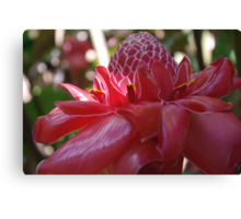 Dappled Sunlight (Red Torch Ginger) Canvas Print