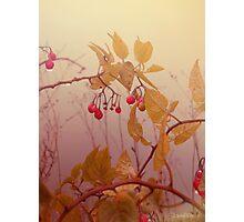 Nightshade Berries Photographic Print