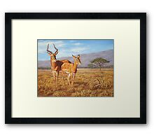 Persistence - African Impala Painting Framed Print