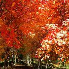 Autumn Path by Tisha Clinkenbeard