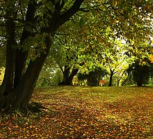 The Beauty of Autumn by AnnieSnel