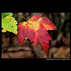 Red And Yellow Maple Leaf by © Sophie W. Smith