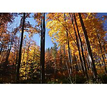 full color forest Photographic Print