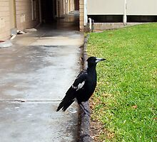 Magpie Four - 22 10 12 by Robert Phillips