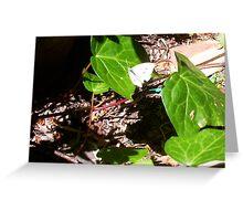 Cabbage Moth Three - 23 10 12 Greeting Card