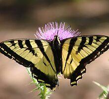 Flutterby by ArchersheART