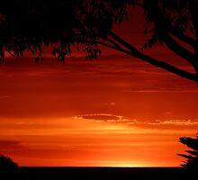 Sunrise silhouettes. by Trish Meyer