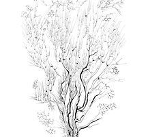Variation on a Cayley tree by Regina Valluzzi