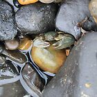Crab amongst the Rocks by Kim Ogden