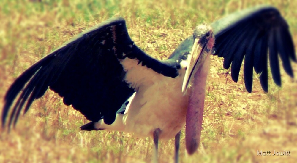 "'Kenian Marabou Stork ""aka"" The Undertaker Bird' by Matt Jewitt"