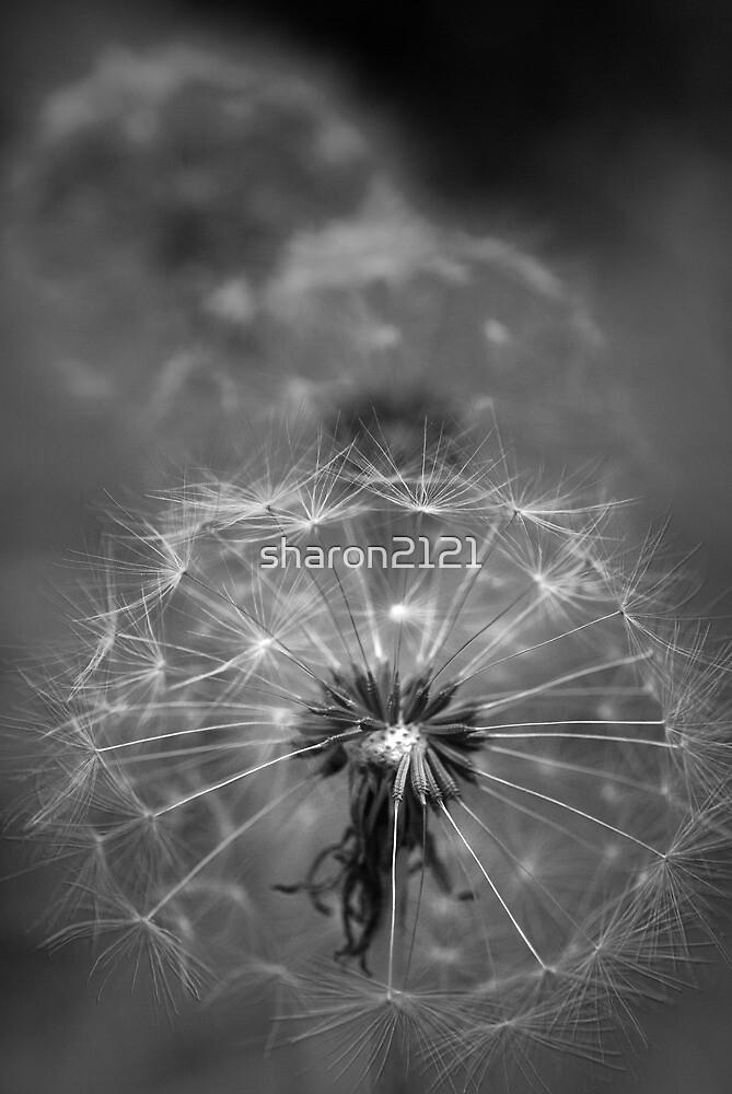 Dandelion Art by sharon2121